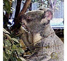 Adorable Koala Photographic Print