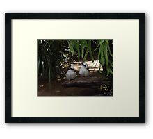 Awesome Kookaburras Framed Print