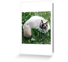 Dougal Amongst the Clover Greeting Card