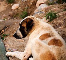 Dog Days by ProdigalMedic