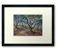 The Grove Framed Print