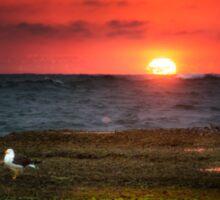 Seagull on Sunset - Sorrento - Mornington Peninsula Sticker