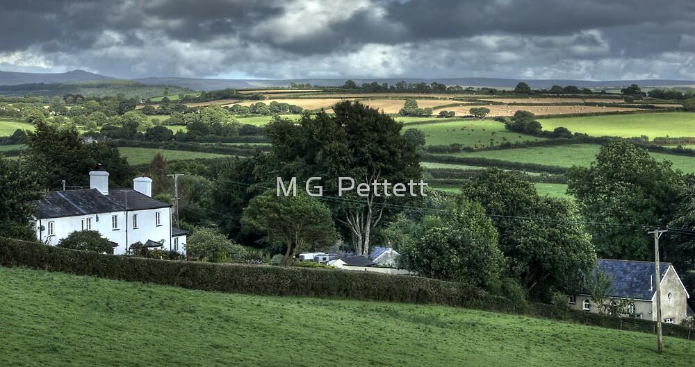 Devon countryside scene by M G  Pettett
