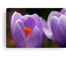 Glowing In The Center Canvas Print