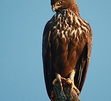 Perch from Bandipur National by anibubble