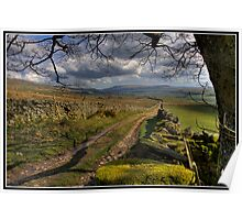 Dry stone walls above Askrigg Poster