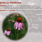 Herbs as Medicine - Echinacea by cdwork