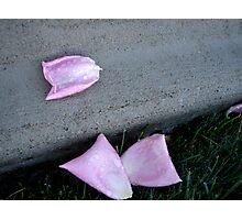 Fallen Rose Petals Photographic Print