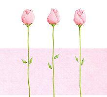 3 Pink Rosebuds by Mariana Musa