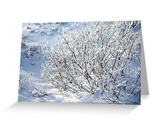 Hoarfrost on Arctic Willow Greeting Card