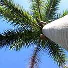 Palm Tree by INTERACTION
