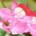 Orchid at Matthaei Botanical Gardens, Ann Arbor, Michigan by Roger Wheaton
