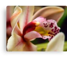 orchid bokeh Canvas Print