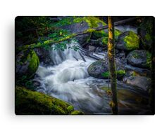 Little River in a Rush. Canvas Print