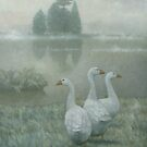 The Three Geese by Stephen Mitchell