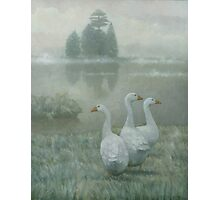 The Three Geese Photographic Print