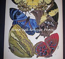 Old Insect Prints by annehallantique