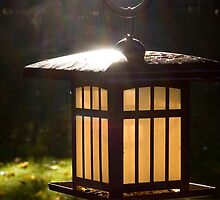 Bird Feeder Sunrise by jenndes