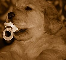Pacified Pup by Maria Dryfhout