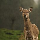 'Rain' Deer  by Franco De Luca Calce