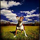 Rosie 3 Legs by Jeff Cochran