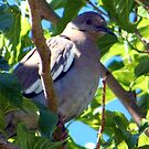 Dove Resting by R&PChristianDesign &Photography