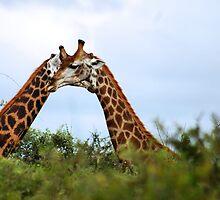 HUGS - THE GIRAFFE - kameelperd by Magaret Meintjes