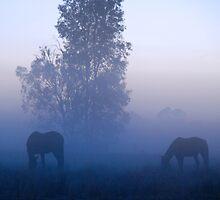 Broodmares, Blue mist by Donna Vanderspek