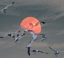 Fly to the Moon by saseoche