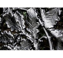 Blarney Castle Wrought Iron Photographic Print