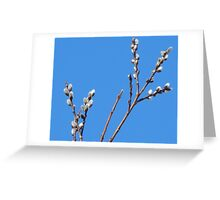 Hello to Spring Greeting Card