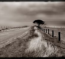 The Path to the Ocean by Angelika  Vogel