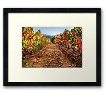 Colorful vineyard Framed Print