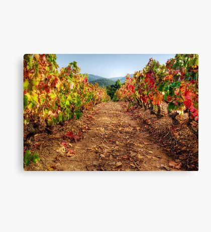 Colorful vineyard Canvas Print