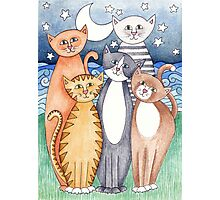 Happy Cats and Kittens Photographic Print