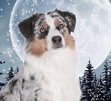 Blue Merle Australian Shepherd by DogLove