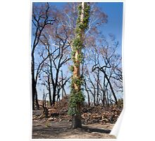 New Life Appearing the recent bush fires Poster