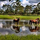GEE GEES by MIGHTY TEMPLE IMAGES
