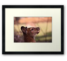 Hello you.. Framed Print