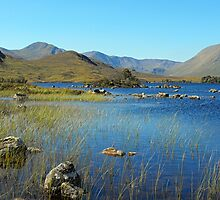 a shot of the highlands by dale54