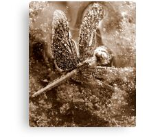 Death of a Dragonfly - in sepia Canvas Print