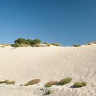 On the Sandhill by metriognome