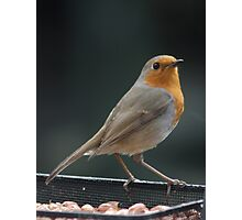 English Robin at my Feeder Photographic Print