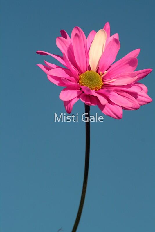 Misti Love nude 246
