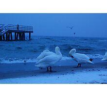 Birds Photographic Print