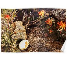 Indian Paintbrush Hawk egg Poster