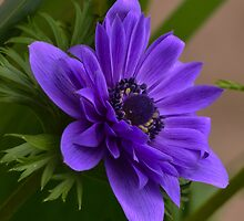 blue spring by Nicole W.