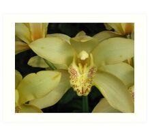 Yellow Orchid at Callaway Gardens Georgia Art Print