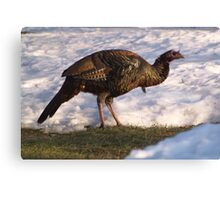 Size makes up for the Looks. Canvas Print