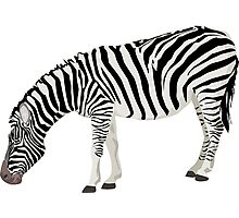 Zebra, Illustration Photographic Print